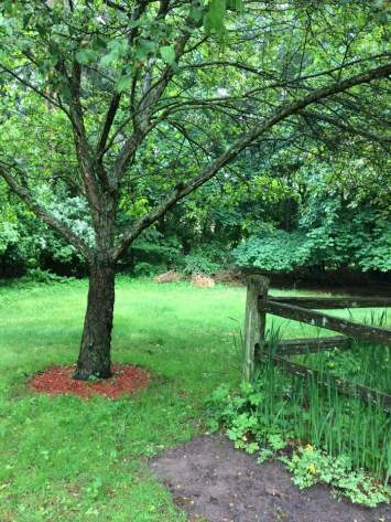 view of a mulched tree. wooden fence, small garden plot