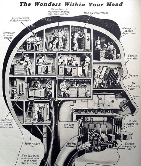 A greyscal profile of a human head, with the brain broken into separate departments such as memory department, cutting up fuel (the mouth) and so forth  as you would find in a bureaucracy