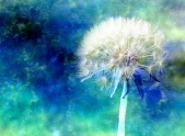 Watercolor paining of a dandelion flower in seed